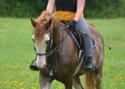 HorseCampGallery27